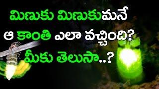 Why do Glow Worms Glow | మిణుకు మిణుకుమనే ఆ కాంతి ఎలా వచ్చింది..? | Top Telugu Media