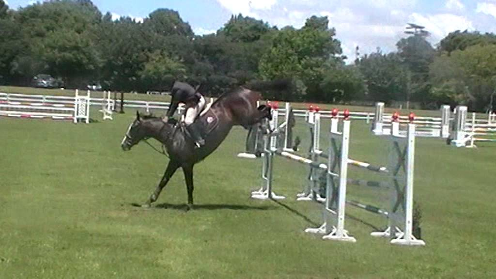 Show Jumping Horses Games Young Horse Show Jumping