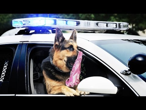Porn-sniffing Police Dogs video