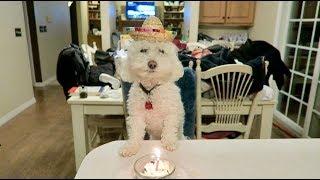 Celebrating Quincy's Birthday!