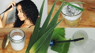 Verwendungen von Aloe Vera • DIY Brow Gel, Leave-In Conditioner, Wellness Drink & mehr