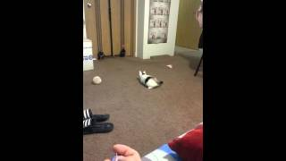 Funny!!! Cat chasing after laser printer!!