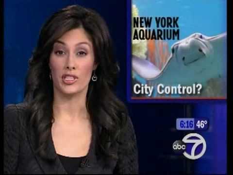 Liz Cho Hot American News Reporter