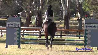162S Suze Randall Knipe on Cuba SR Novice Rider Show Jumping Galway Downs Jan 2014