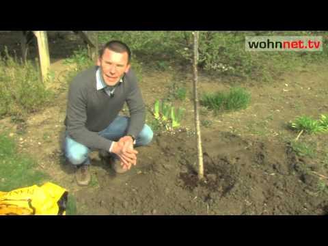 Bäume Pflanzen - So Geht's Richtig!