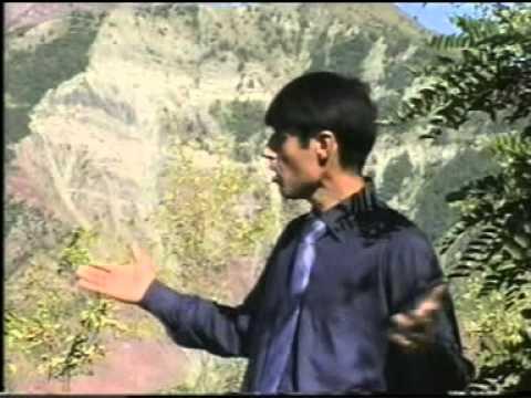 Махмадали Умар (шамоли лолазор)