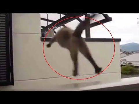 Best funny animals videos (MEvideos's Version)