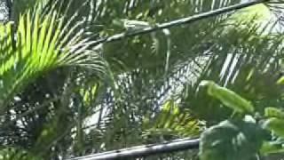 Watch ZZ Top Lizard Life video