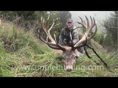Hunting New Zealand - Ample Hunting highlights 2011