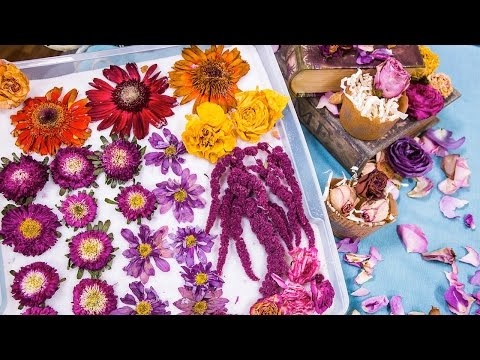 Shirley's Tips to Dry and Preserve Flowers