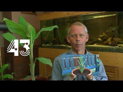Die Sämlinge und wie geht es weiter mit den Exoten und anderen Pflanzen Teil 43