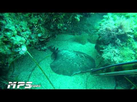 15 Avventure di Pesca in Apnea 2010