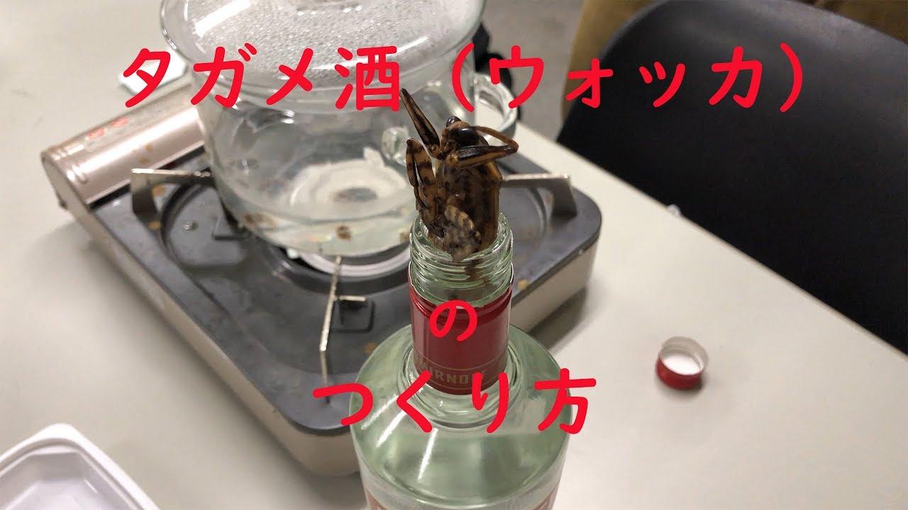 タガメの画像 p1_34