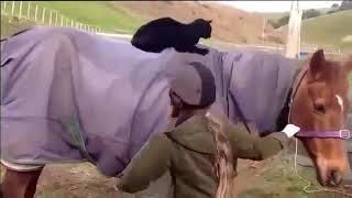 Funny Cats and Dogs Videos, New Funny Animals Video   Crazy Animals Video