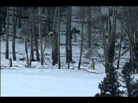 Documental de Lobos