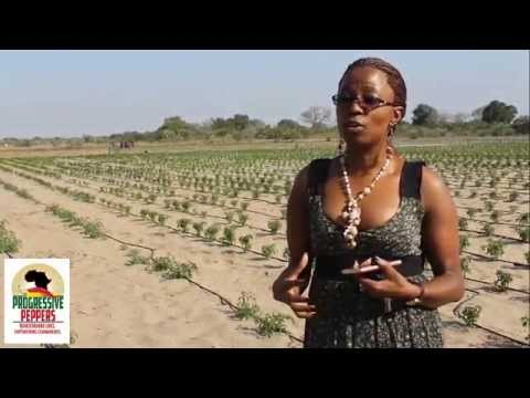 South African Economic Development Support for Progressive Peppers