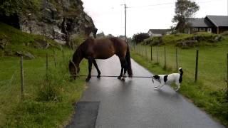 Sacando el caballo a pasear