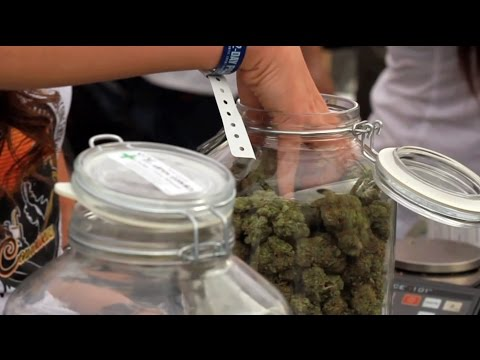2015 HIGH TIMES SoCal Medical Cannabis Cup: Saturday Highlights