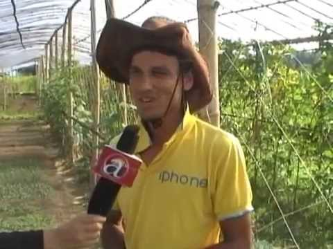 Young farmers attracted towards agriculture farming - Butwal