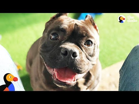 Pit Bull Dog Is The Happiest Boy Since He Got Rescued - BATMAN | The Dodo