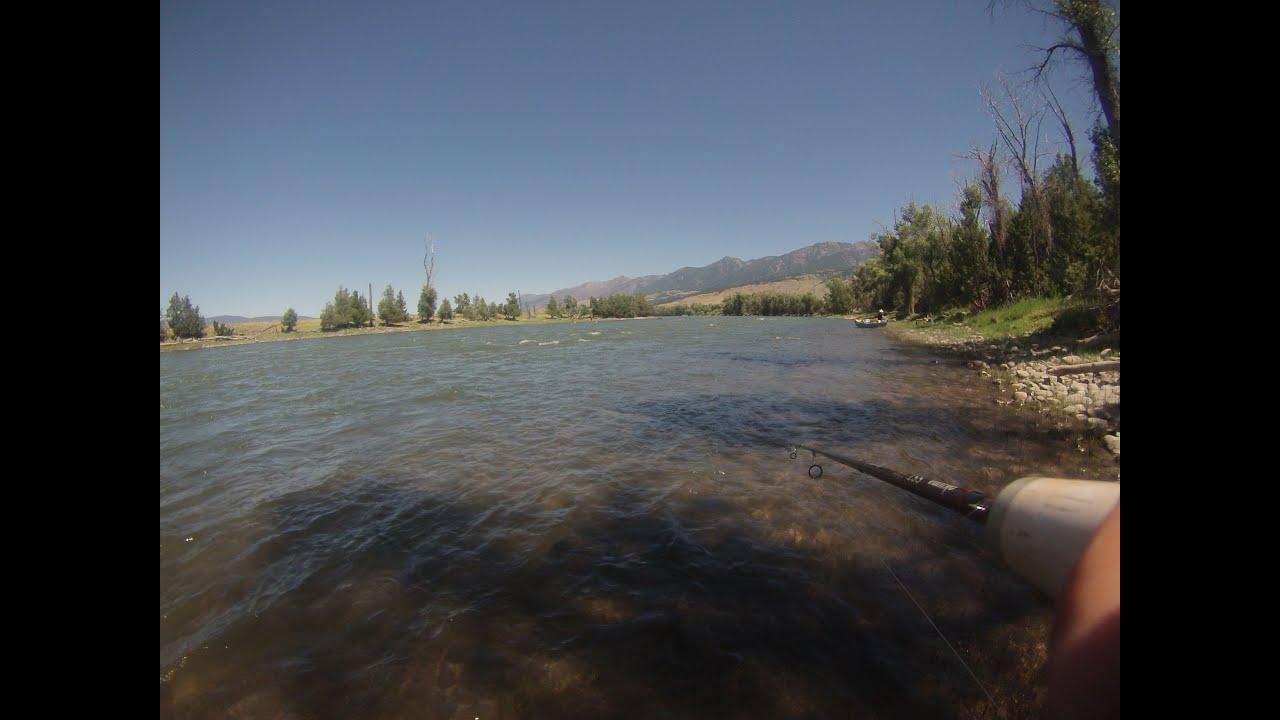 Yellowstone river fishing july 2014 fishing focus for Yellowstone river fishing
