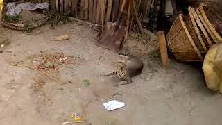 so funny cat    Pet and Animals