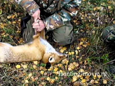 Пособие по снятию шкуры лисицы