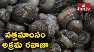 నత్తమాంసం అక్రమ రవాణా | దివిసీమ నుండి చెన్నైకి అక్కడనుండి సౌత్ ఆఫ్రికాకి రవాణా | hmtv News