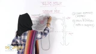 03. Structure of the Nephron | নেফ্রনের গঠন | OnnoRokom Pathshala