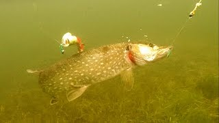 Fishing: pike attack MonsterTeez and Monster Fly underwater. Рыбалка: щука атакует  муху.