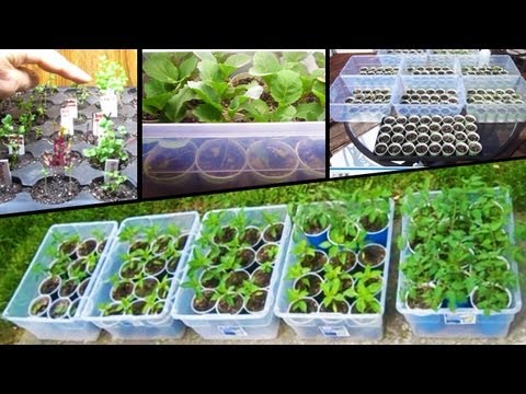 Starting vegetable seeds tomato how to plant from seed for How to plant vegetables