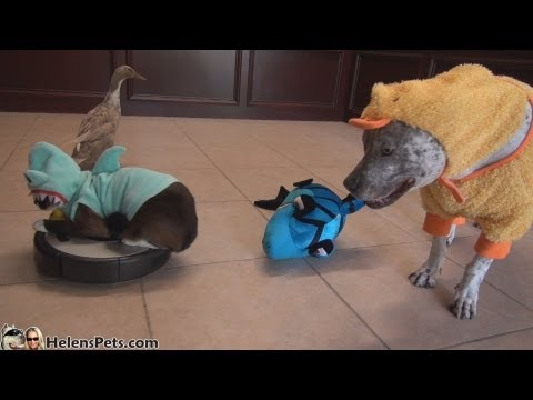 Shark-Cat, Shark-Duck and Duck-Dog doing a Shark WEEK!