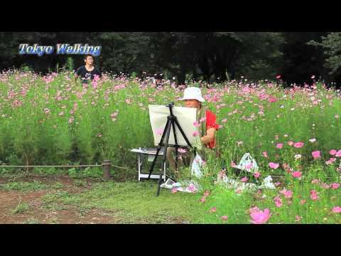 Cosmos Flower Garden Tokyo, Japan コスモス