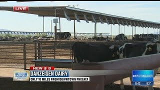 Jaime's Local Love:  Danzeisen Dairy