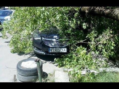 У Калуші дерево впало на два припарковані автомобілі