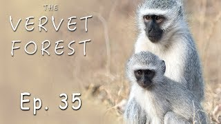 Baby Monkeys and Their Foster Mom's Happy As Can Be - Ep. 35