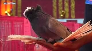 مسابقة لجمال الطيور في البصرة