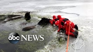 Two Clydesdales fall through ice on a frozen lake