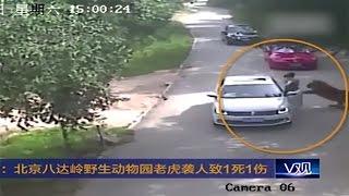 Hổ Tấn Công Người Tại Sở Thú Trung Quốc