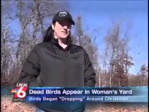 Dead Birds Across America News Report. HAARP Or Chemtrails?