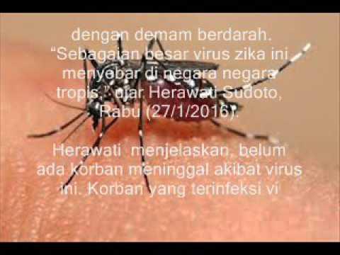 Gejala Virus Zika Seperti Demam Berdarah