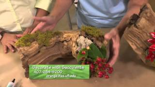 Central Florida Gardening-Decorating With Succulents
