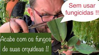 ELIMINE OS FUNGOS DE SUAS ORQUÍDEAS, SEM FUNGICIDAS !