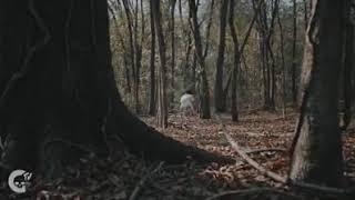 Phim kinh dị trailer