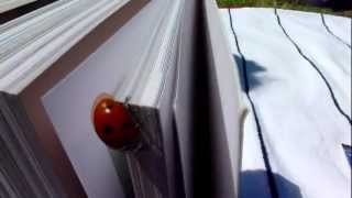 Panasonic TZ18 - Continuous Focus / Stabilization Test - Starring_ Ladybug