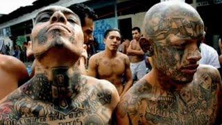 "Trump Calls Immigrants ""Animals""? Mainstream Media Finally Implode!!!"