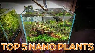 TOP 5 NANO AQUARIUM PLANTS