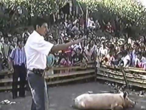 Cerdo encebado