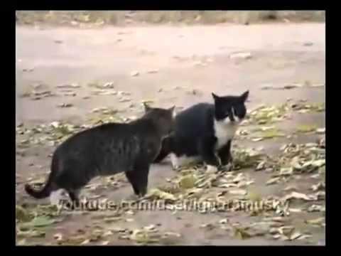 Собака разнимает дерущихся котов