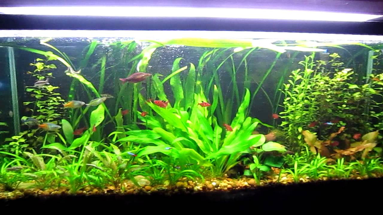 Aquascaping Techniques : Tips and Tricks to successful Aquascaping (Freshwater) - YouTube
